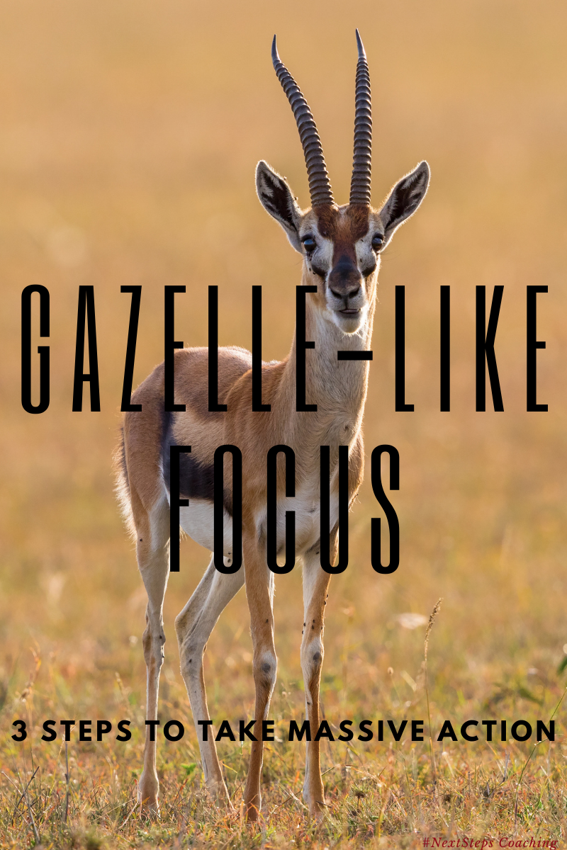 Blog Post Cover - Gazelle-like focus imprint over actual gazelle